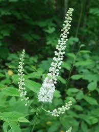 Black Cohosh can help with menopause.